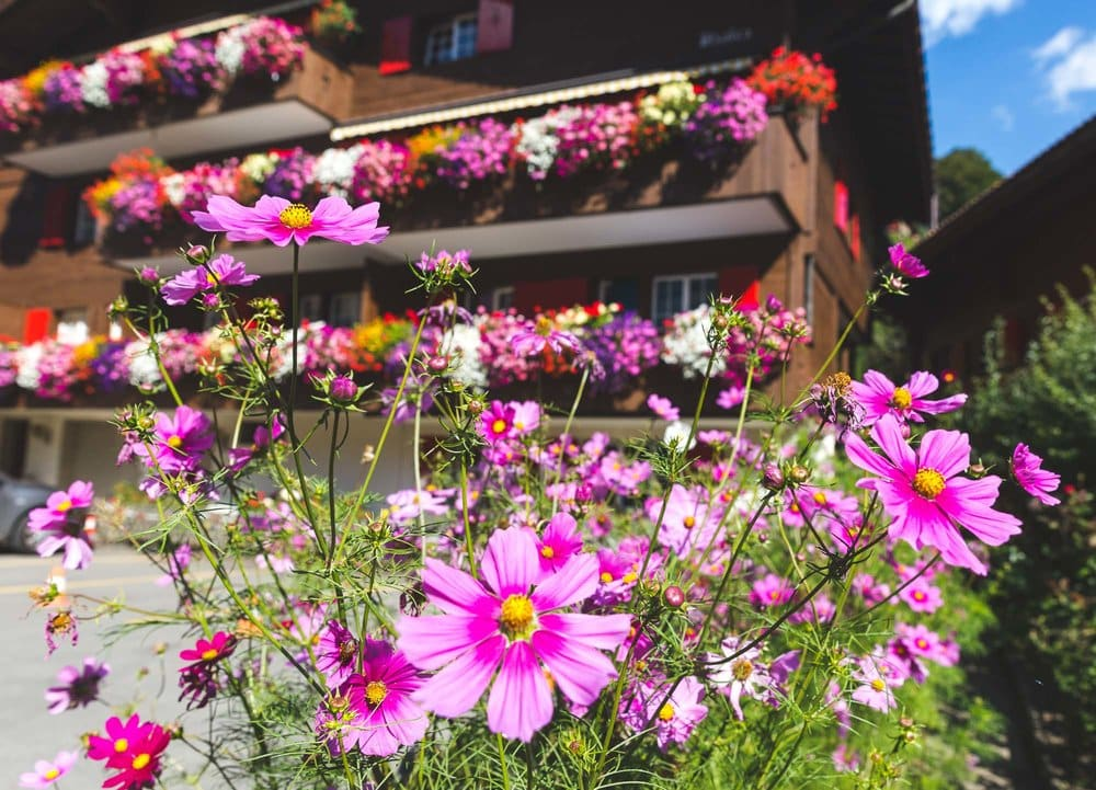 Swiss flowers planted in Summer