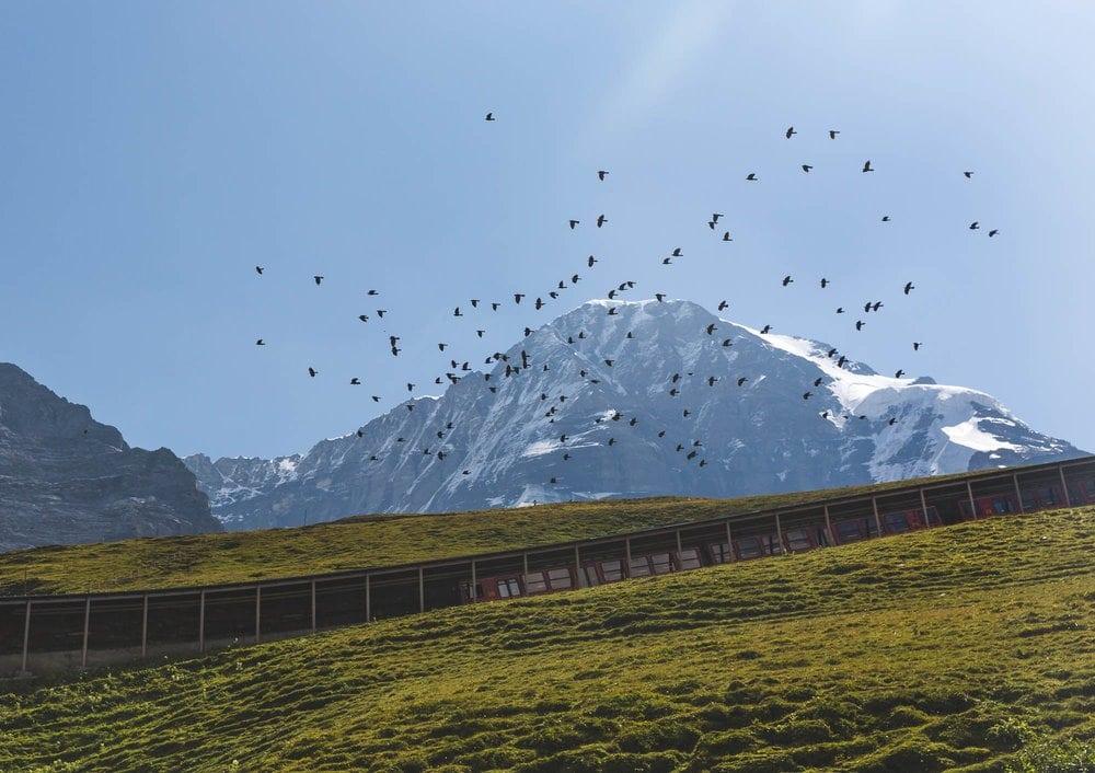 The mountain Bahn taking you to the top of kleine scheidegg
