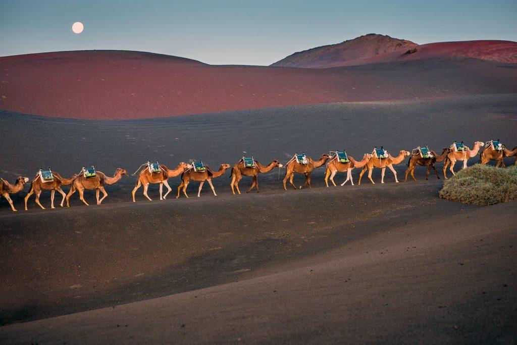camel ride lanzarote